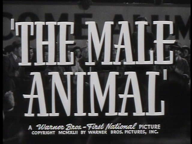 image: The Male Animal trailer title